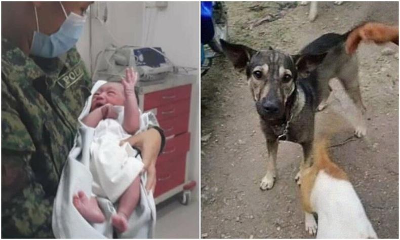 Хүүхдийн амь аварсан ухаалаг нохойн сэтгэл хөдөлгөм түүх