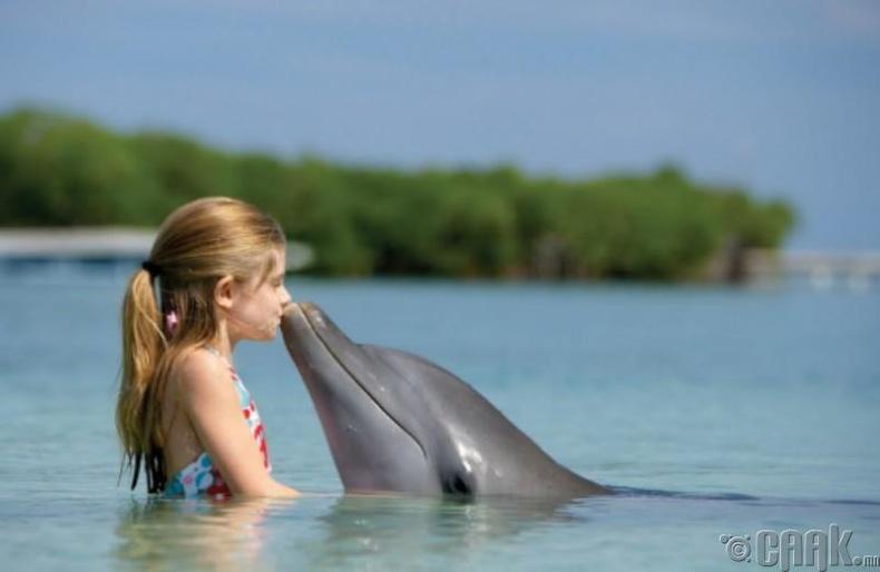 Дельфин ухаалаг биш