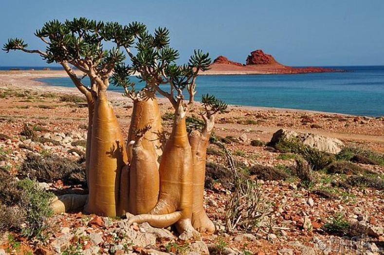 Йемен дахь Сокотра арал
