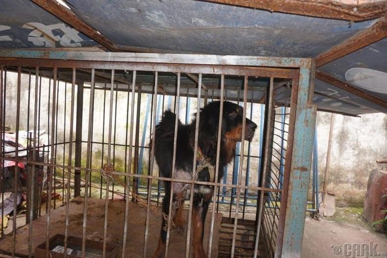 Нохойнуудыг 23 цагийн турш торонд хорьдог