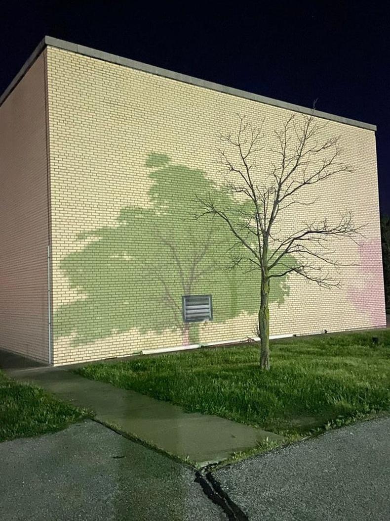 Навчтай, навчгүй хоёр модны сүүдэр давхацсан нь