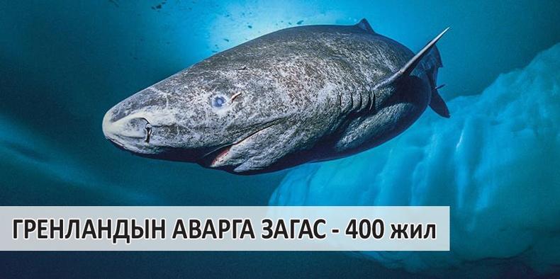 Дэлхий дээрх хамгийн урт настай амьтад
