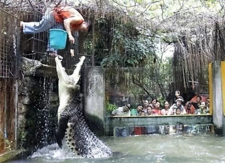 Хятадын зоопаркийн амьтан хооллогч