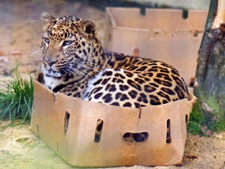 Жаахан л том биетэй болохоос угтаа ч муур л даа.
