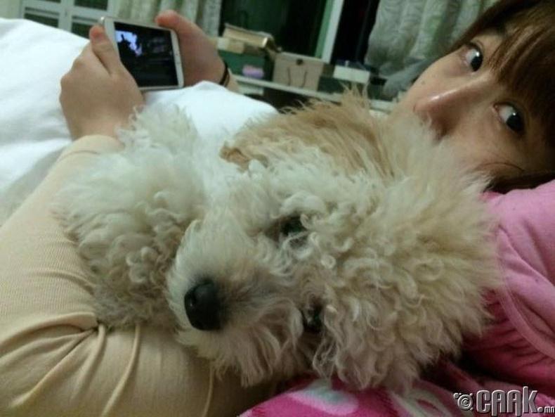Хятадууд муур, нохойны мах иддэг
