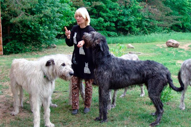 Ирланд анч нохой