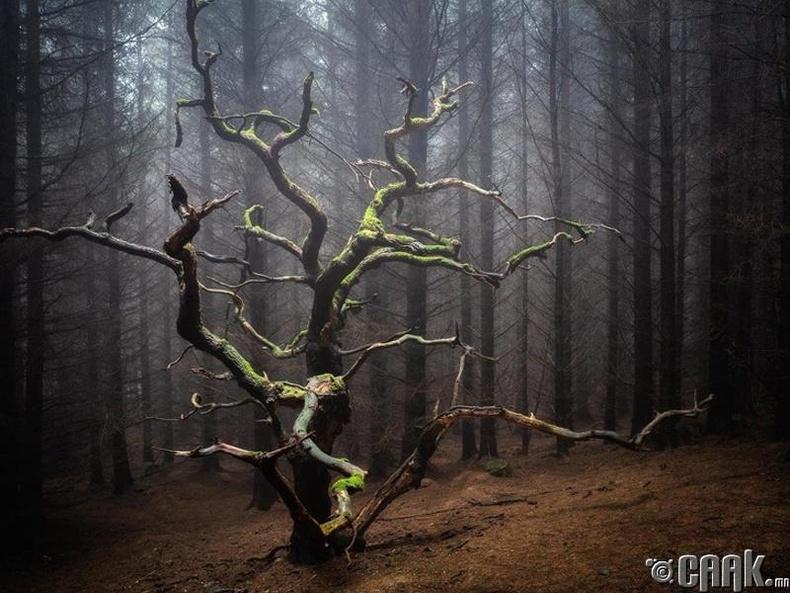 Аймшгийн кино мэт цор ганц мод