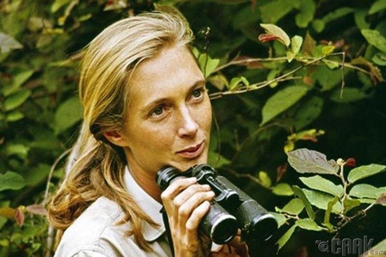 Жейн Гудолл (Jane Goodall), 1934 - Одоо