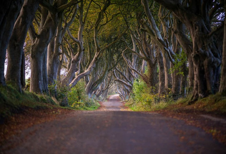 Харанхуй гудамж, Хойд Ирланд (The Dark Hedges)