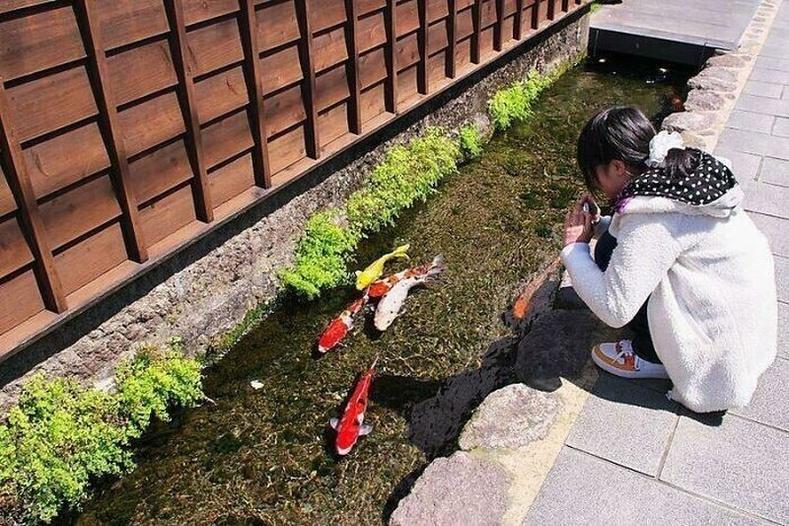 Японы Кюүшюү арлын Шимабара хотынбохир усны хоолой загас амьдрахуйц тунгалаг