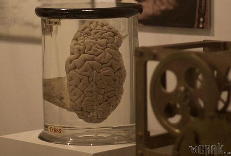 Чарльз Баббажийн (Charles Babbage) тархи