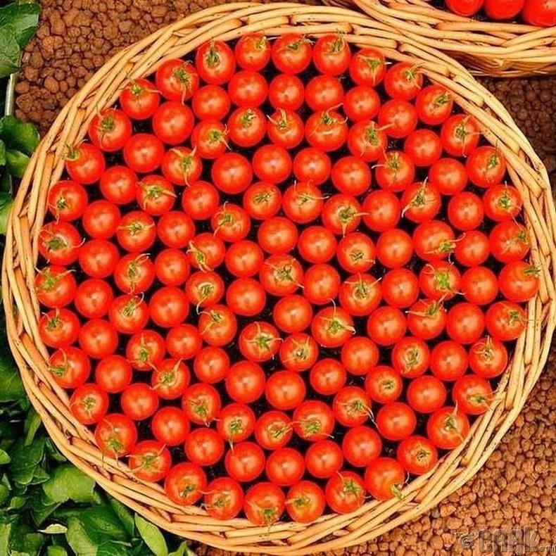 Сагс дүүрэн улаан лооль