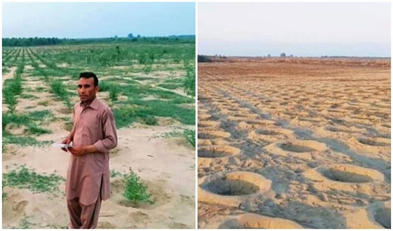 Пакистаны цөлийг ойжуулах төслийг нутгийн иргэд эсэргүүцэж, 6000 модыг сугалж хаяжээ