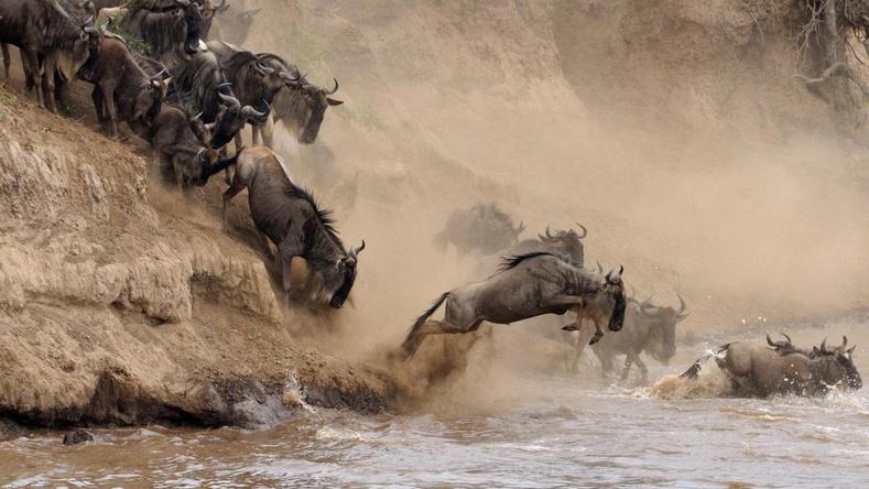 """Жил бүр хэдэн мянган амьтны аминд хүрдэг Африкийн """"үхлийн"""" гол"""