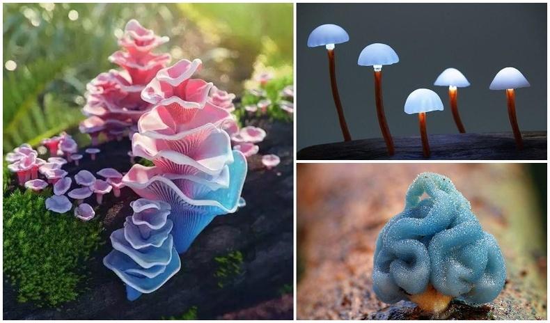 Байгаль эхийн бас нэгэн үзэсгэлэнт бүтээл - Мөөгний ертөнц (50 фото)