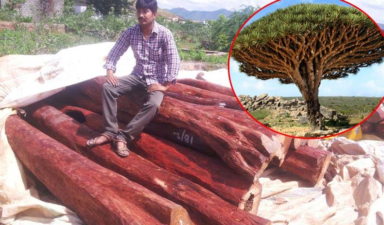 Дэлхий дээрх хамгийн үнэтэй 10 мод