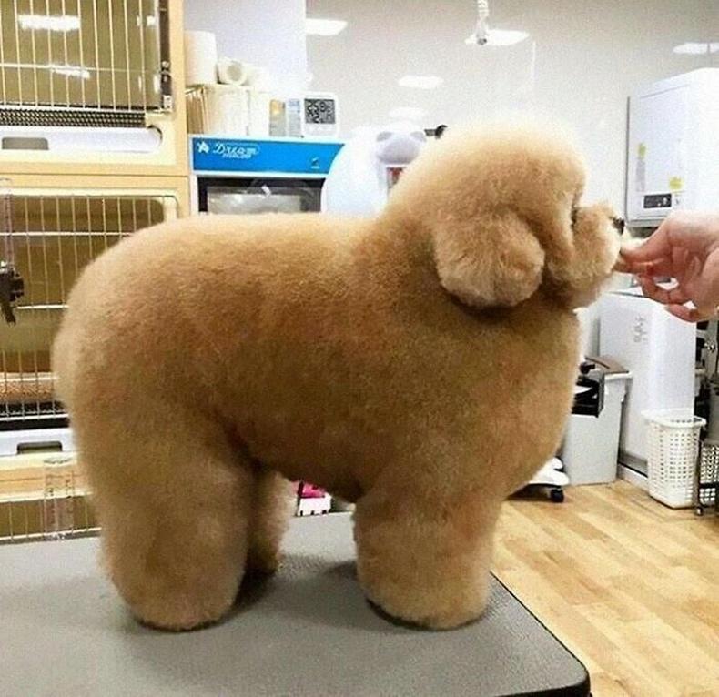 Дэлхийн хамгийн хөвсгөр нохой.