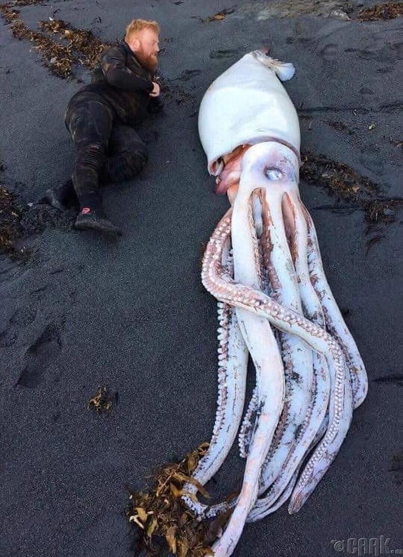 Шинэ Зеландын эрэг дээр шидэгдсэн аварга наймаалж