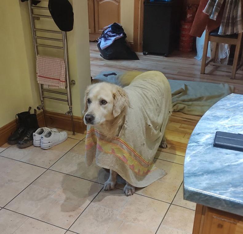 """""""Нохой маань хуучин алчуурыг мэрж нүх гаргаад, нөмрөг болгоод өмсчихсөн"""""""