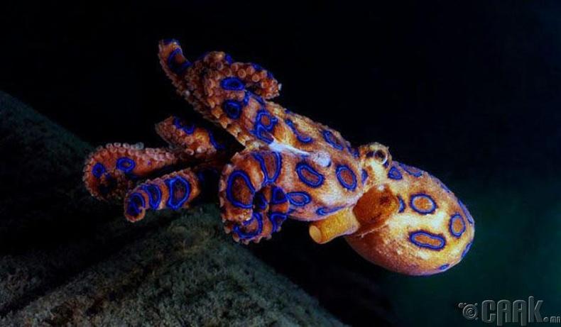 Цэнхэр цагирагтай наймаалж