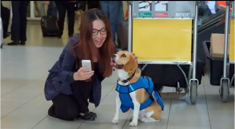 Голландын хамгийн ухаантай нохой