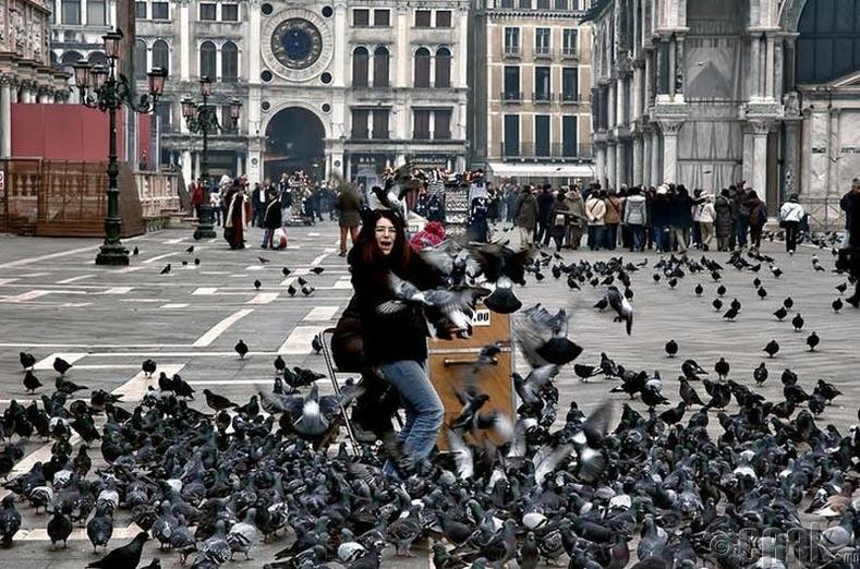 Италид Гэгээн Маркийн талбайд тагтаа хооллох нь хууль бус