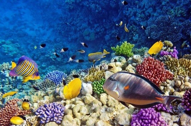 Далайн гүнд орших зүйлсийн 95 хувь нь амьд организм