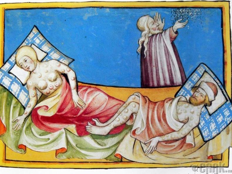 Европ тивийн гуравны нэгийг үхэлд хүргэсэн харх болон нохой бөөс