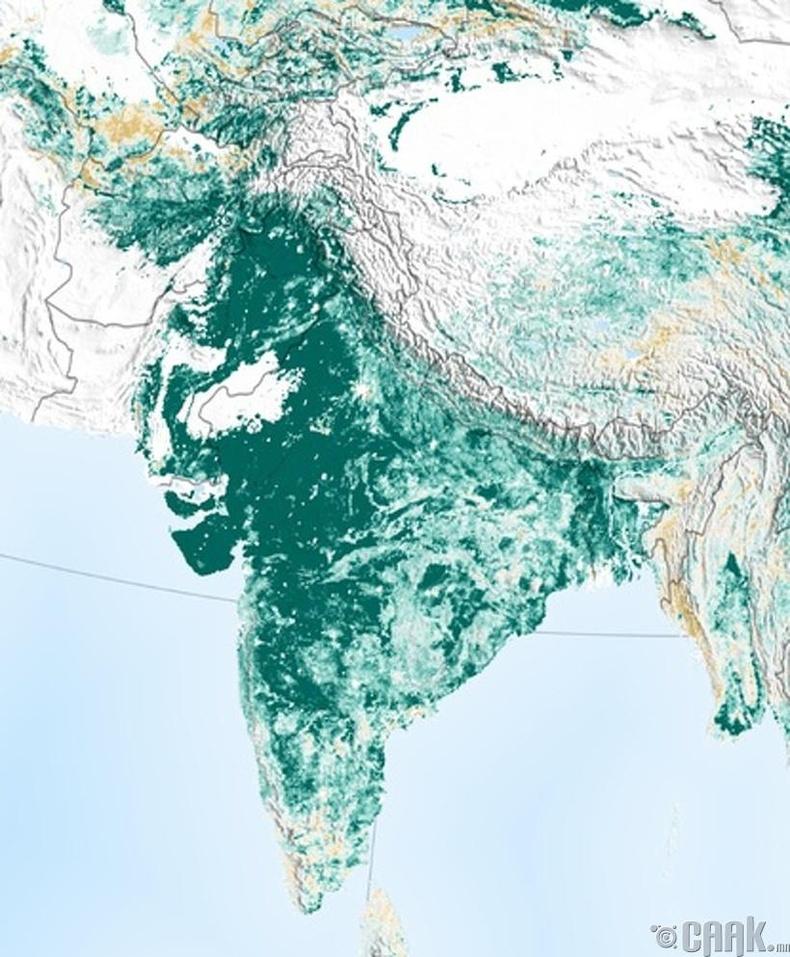 Дэлхий нийтийн ногоон бүрхэвч багассан ч Энэтхэгт өссөн