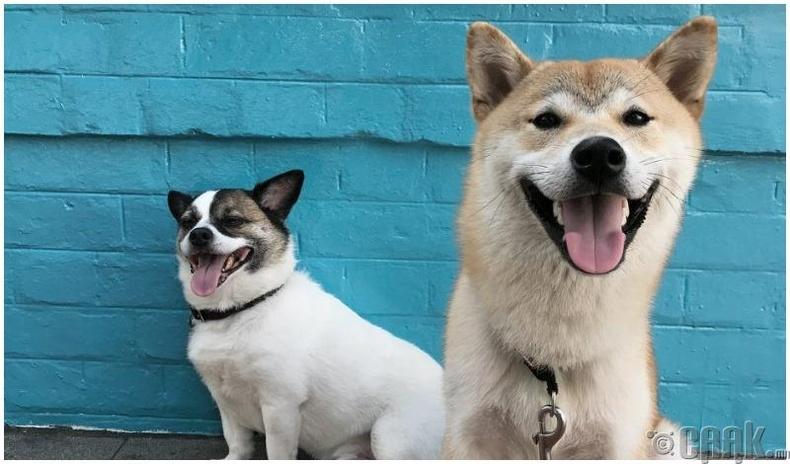Нохойны долоо жил хүний нэг жилийн настай тэнцэнэ