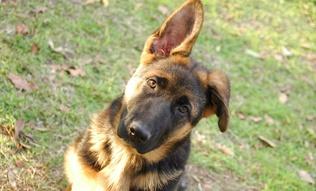 Таны нохой юу бодож байгааг яаж мэдэх вэ?