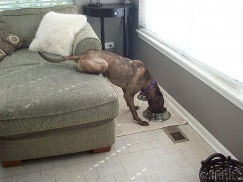 Нохой хүртэл залхуурдаг