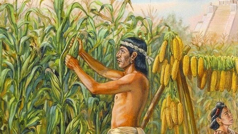 Хүн төрөлхтнийг өдий зэрэгт хүргэсэн гайхамшигт 6 ургамал