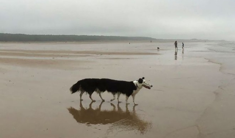 """Бүтэлгүй """"panorama"""" зурагны золиос болсон амьтад"""