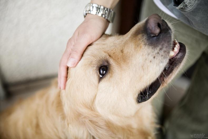 Амьтан тэжээх нь зүрхэнд сайн