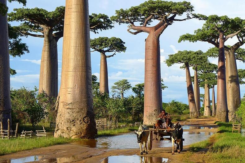 Дэлхийн хамгийн гайхалтай моднууд