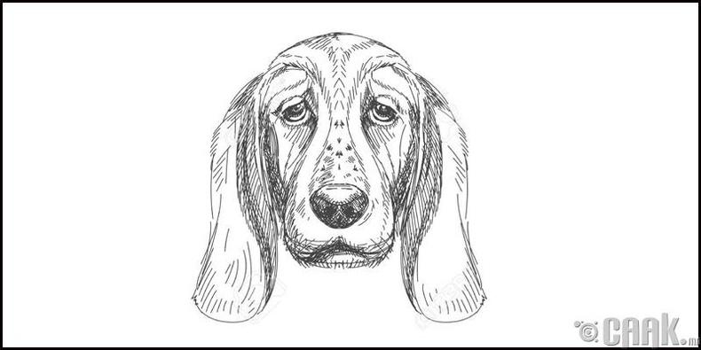 Нохой жилтнүүдийн зан араншин