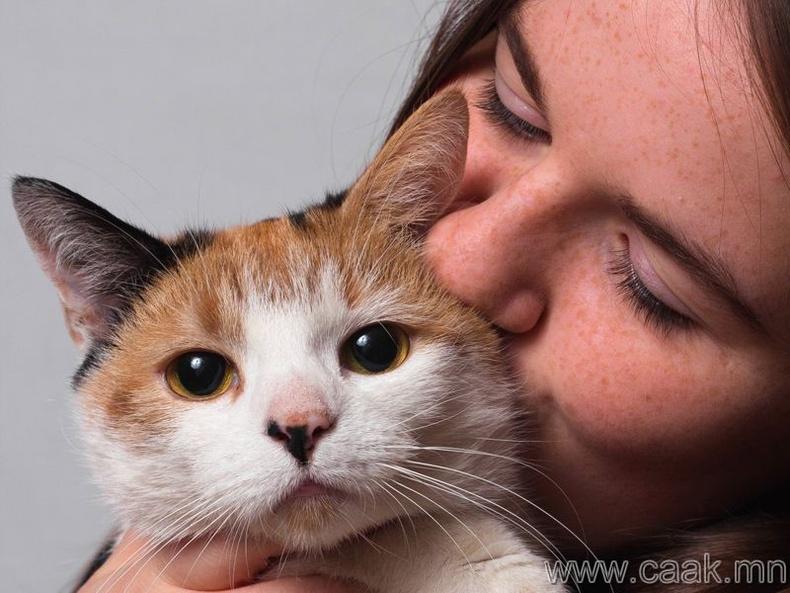 Муур тэжээдэг бол...
