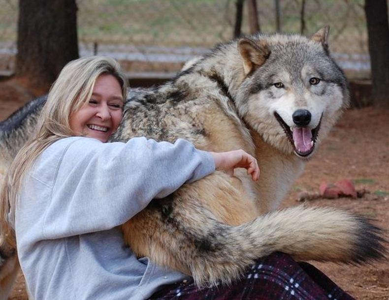 Чоно-нохойны эрлийз