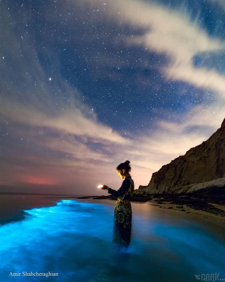 """""""Биолюминесценс"""" буюу урсгал ус цэнхэр өнгөөр гэрэлтэх үзэгдэл"""