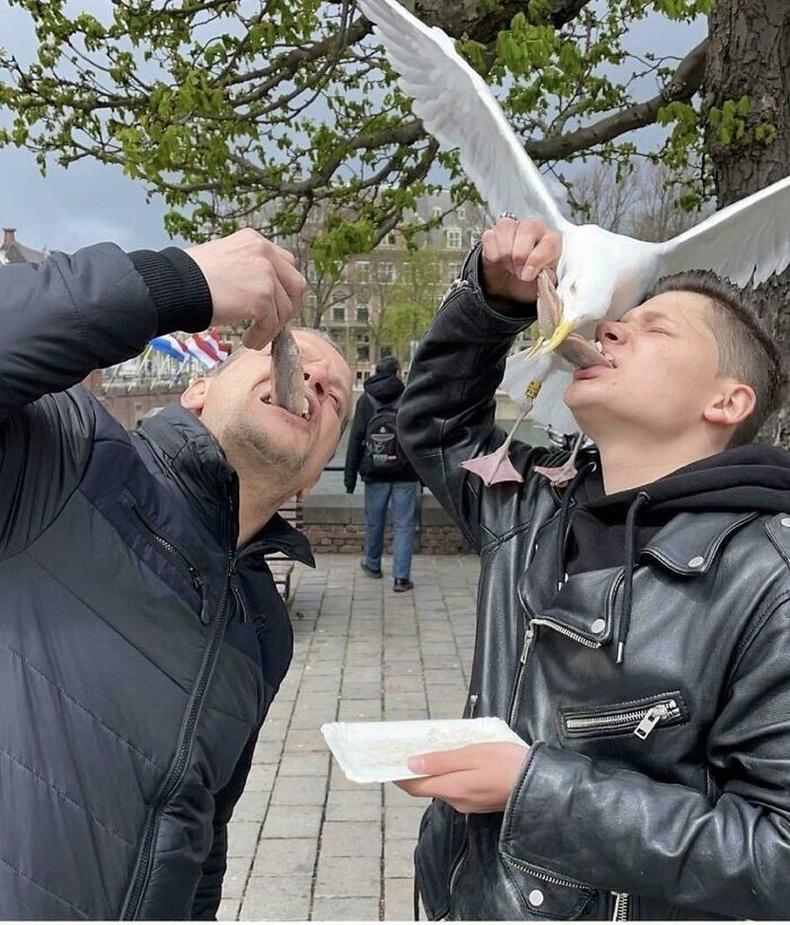 Нидерландын Хааг хотод гадаа юм идэх гэвэл юу болдог вэ?