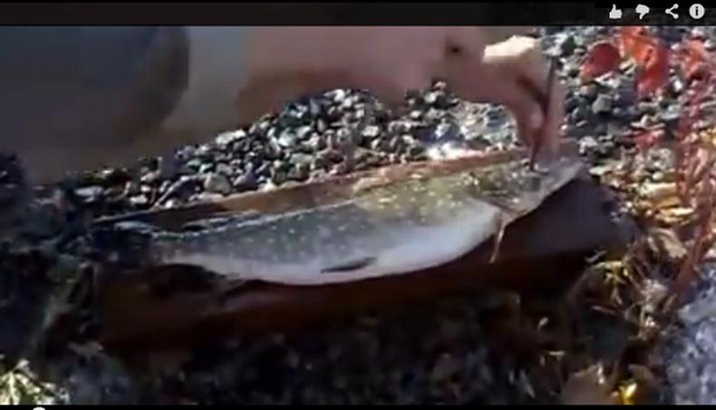 Загас цэвэрлэх Орос арга