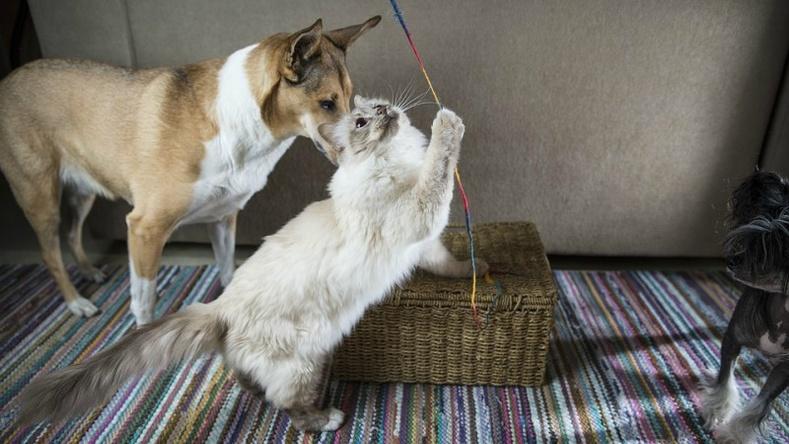Зарим нохой болон муур хүнээс харшилтай