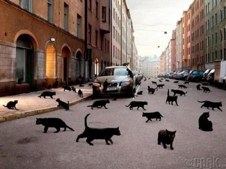 Өмнүүр хар муур гүйх