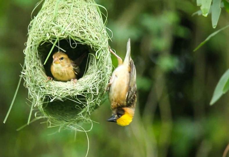 Шувуудын гайхалтай үүр