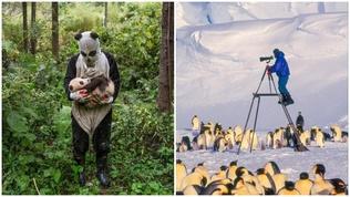 """Хүмүүст хамгийн их таалагдсан """"National Geographic"""" сэтгүүлийн гэрэл зургууд"""