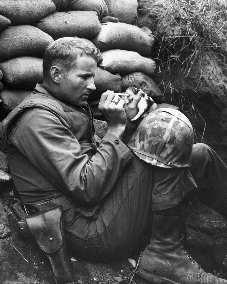 Өнчирсөн муурын зулзагыг тэжээж байгаа Америк цэрэг, 1953 он