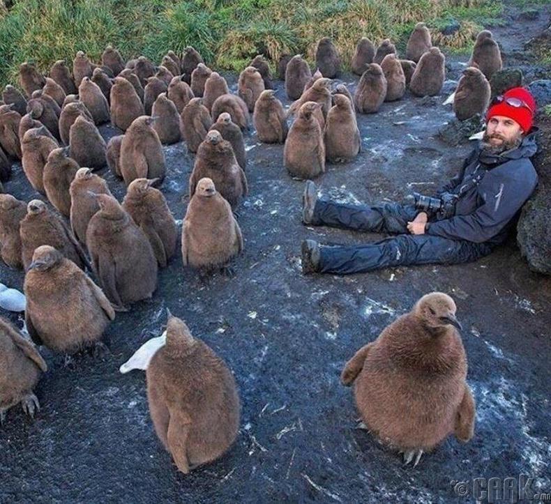 Бяцхан оцон шувуудтай найзууд болсон нь