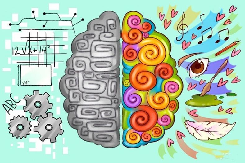 Хүн бүрийн баруун, зүүн тархи өөр өөр хөгжилтэй