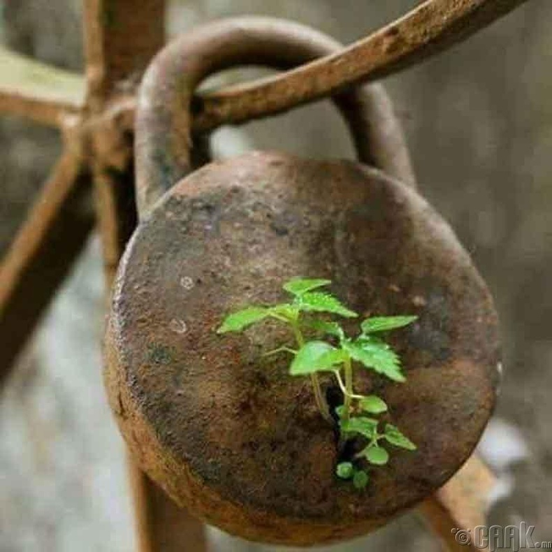 Цоожин дээр ургасан ургамал